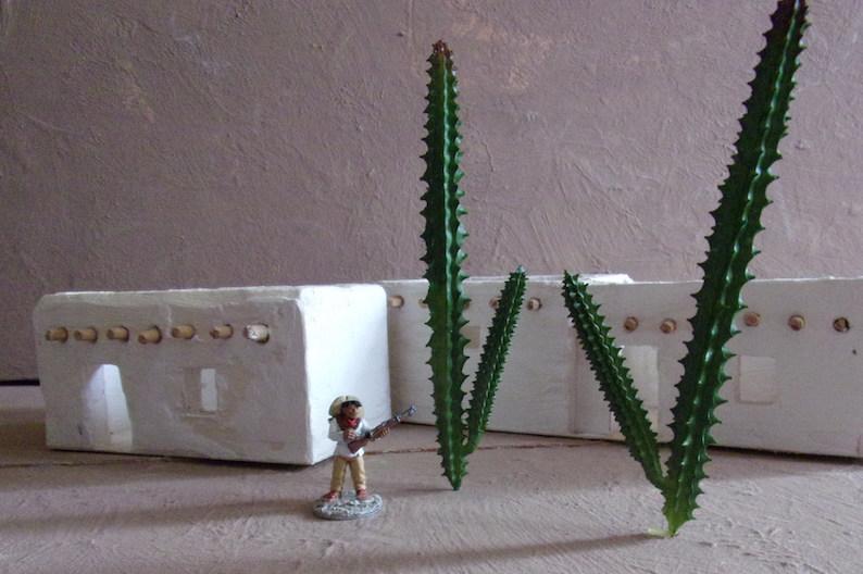 Cactus Cactus-Rayher